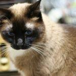 飼ってる猫の紹介れい(たぶん7歳)