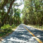 唐津から東松浦半島をドライブ。虹の松原を行く