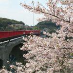 桜が見たくなって西海橋に行ってきた
